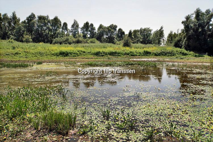 Nederland, Ooijpolder, 23-6-2020 In een opdrogende waterpoel groeien waterlelies. De poel vult zich tijdens hoogwater van de rivier de Waal, Rijn, maar het terugtrekkende water zorgt ervoor dat het niveau weer zakt, bij laagwater . De poel wordt door wilde runderen en paarden gebruikt als drinkplaats . rivierengebied, rivierenland, uiterwaarden, rivierenlandschap, rivierlandschap . Uiteindelijk zal de plas droogvallen . Foto: Flip Franssen