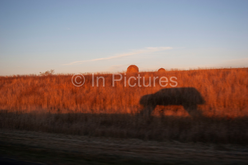 SUV truck drives along a prairie train south of Minot, North Dakota, United States. These ancient, dusty, sometimes overgrown and impromptu roads bisect the land joining with the more organised grid road system. Silhouette of the vehicle forms in the low evening light as the sun sets a deep orange.