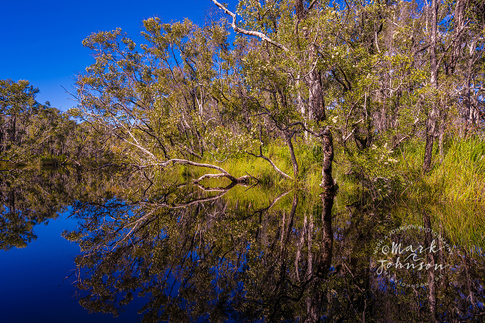 Reflections in the calm tranquil Upper Noosa River, Everglades, Cooloola National Park, Queensland, Australia