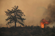 Wind whips up fire near Salmon Creek Road southwest of Omak Friday August 21, 2015.<br />