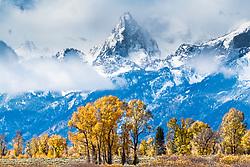 Golden Cottonwoods of a Jackson Hole Autumn. I love the change of seasons
