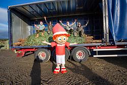 At the Christmas Tree Farm Wester Auchentroig Farm, Nr Buchlyvie. Highland Xmas trees.