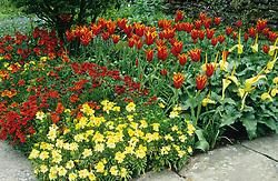 Arum creticum with Tulipa 'Queen of Sheba' and Erysimum 'Prince Series' - wallflowers