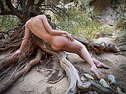 Nude woman sitting on the roots of a very old tree in a canyon in Moab, Utah