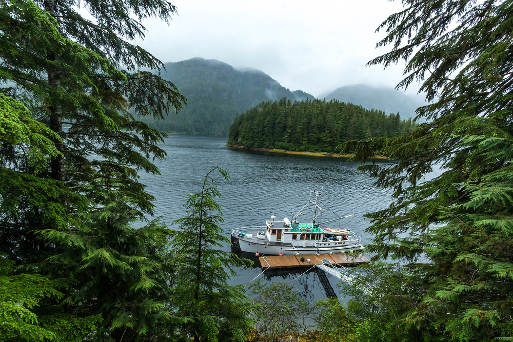 Princeton Hall moored in Lisianski Strait. Framed by spruce trees like she should.