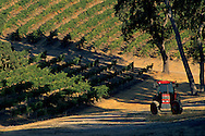 Morning light on vineyards & Tractor along Vineyard Drive, Paso Robles, San Luis Obispo County, California