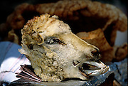 Sheep's' head display advertising the meals available at the El Mirador restaurant in Malino de Flores National Park, Mexico. (Supporting image from the project Hungry Planet: What the World Eats.)