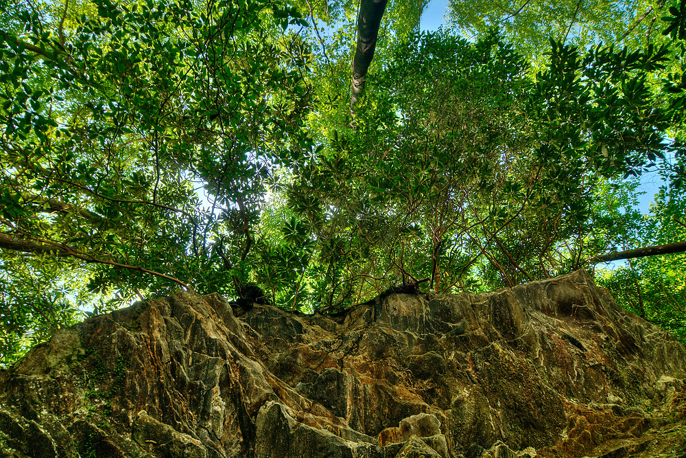 An unofficial trail beneath a rock ledge at Lake Jocassee, SC on Wednesday, June 7, 2017. Copyright 2017 Jason Barnette