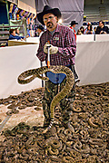 A Jaycee volunteer snake handler holds up a western diamondback rattlesnake in the snakepit during the 51st Annual Sweetwater Texas Rattlesnake Round-Up March 14, 2009 in Sweetwater, Texas. During the three-day event approximately 240,000 pounds of rattlesnake will be collected, milked and served to support charity.