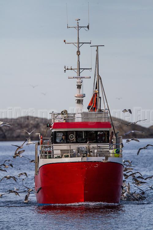 Fiskebåt på vei inn til fiskemotak i Fosnavåg   Fishing boat on it's way to deliver fish in Fosnavåg.