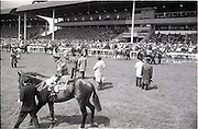 """26/06/1965<br /> 06/26/1965<br /> 26 June 1965<br /> Irish Sweeps Derby at the Curragh Race Course, Co. Kildare. The horses on the track before the race. Horses are no.7 Solwezi, (G.W. Robinson up) and left to right in background: 15. """"Meadow Court"""" (L. Piggott up); 14. """"Donato"""" ( A. Breasley up); 13. """"Bettered"""", (P. Sullivan up); 12.""""Jealous"""" (W. Rickaby up); 11. """"Baljour"""" (J. Purtell up) and 10. """"Sierra de Mizas"""" (J. Mulhall up)."""
