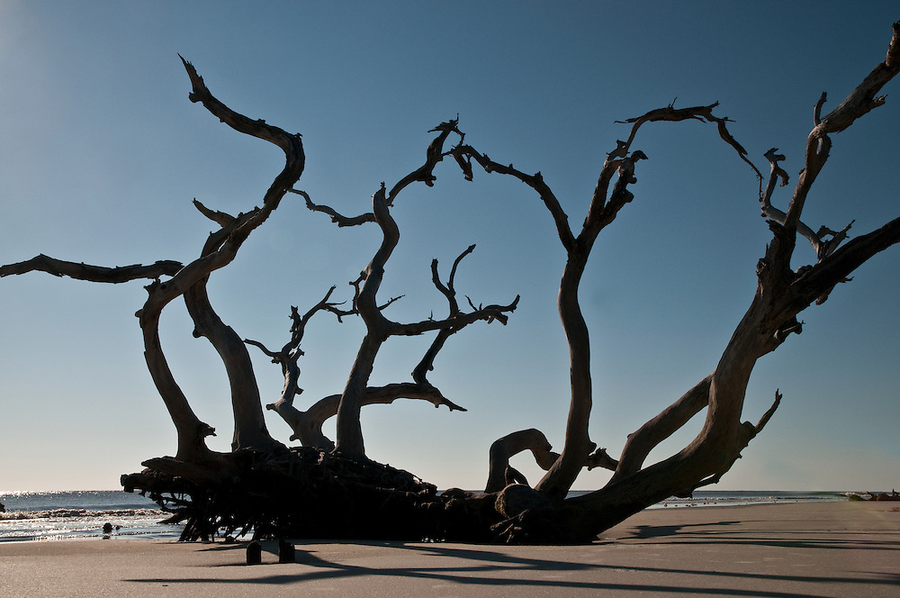 Driftwood Silhoutte