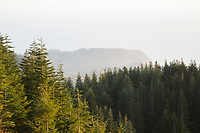 Rainforest Reserve, a conservation project by the North Coast Land Conservancy along the north  Oregon coast near Cannon beach.