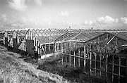 18/09/1963<br /> 09/18/1963<br /> 18 September 1963<br /> Nurseries at Rush, Co. Dublin. Tomato glasshouses.