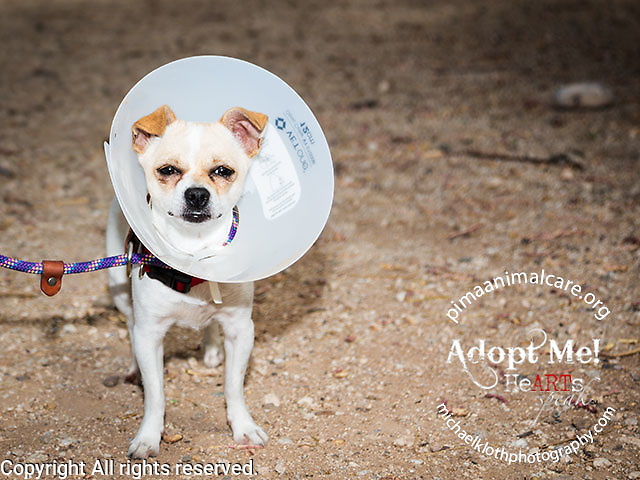 Mickey also seemed to be in pretty high spirits despite his cone.