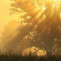 """""""Golden Blessings""""<br /> <br /> Glorious golden sunlight streams through the morning fog, and trees on an early autumn day!"""