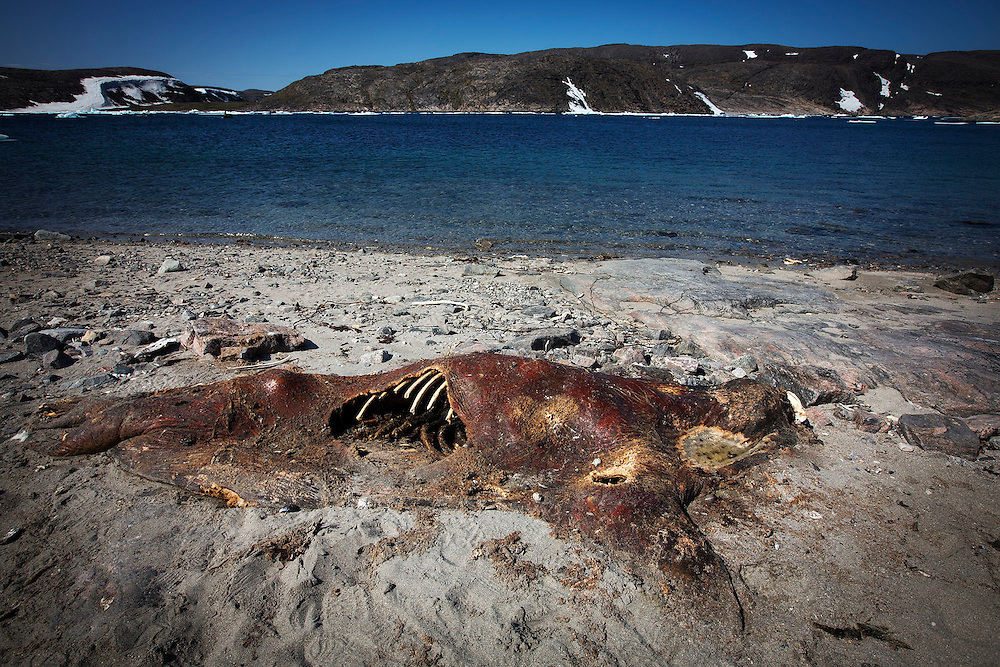 on Digges Island, Nunavik, July 20, 2015. Photograph by Todd Korol for The Toronto Star