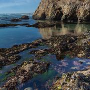 Tide Pools Greyhound Point - Davenport, CA