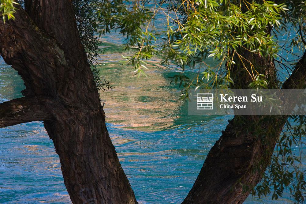 Tree with Lake Geneva, Geneva, Switzerland