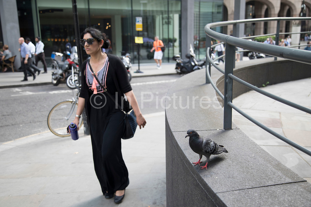 Pigeon interacting with the city environment in London, England, United Kingdom.