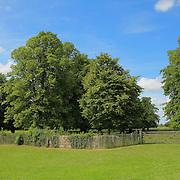 Fence & Trees - Avebury, UK