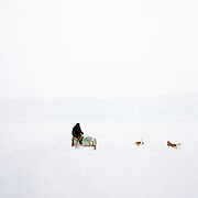 Dogs chasing a motorcycle sidecar across a frozen lake Biakal, Siberia, Russia