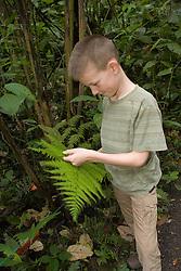 South America, Ecuador, El Pahuma Orchid Reserve.  Boy (age 8) examines fern leaf in botanical garden set in lush cloudforest.  MR