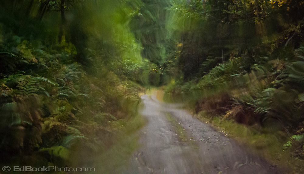 driving down a dirt forest service road with all items seen distorted through a wet windshield, Mount Tahoma State Forest, WA, USA