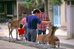 People Feeding Sika Deer