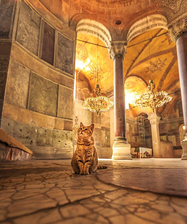 A tourist cat in Hagia Sophia Museum in Istanbul, Turkey.