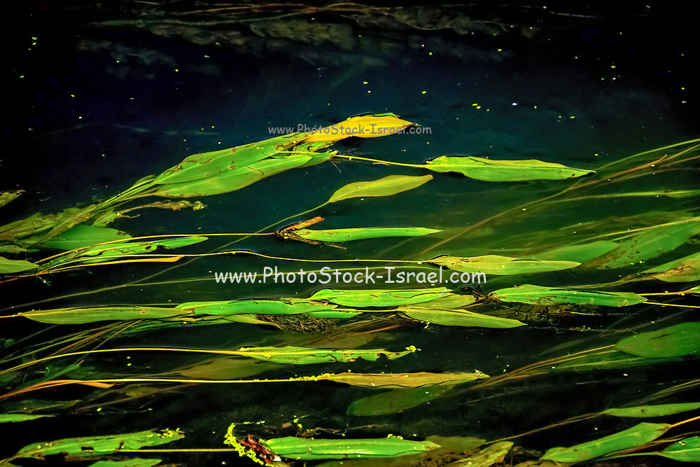 Water plants in a swamp