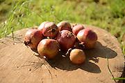 Organic pomegranates
