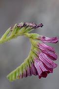 Tiradentes_MG, Brasil.<br />  <br /> Detalhe de uma flor.<br /> <br /> A flower detail.<br /> <br /> Foto: JOAO MARCOS ROSA / NITRO