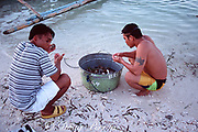 Fishermen enjoy a meal of sea urchins from the grass beds surrounding the island, Malapascua Island, central Philippines, Vizcayan Sea, Western Pacific Ocean
