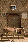 Donkey passes in front of the house were French explorer René Caillié stayed in Timbuktu, Mali.