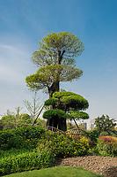 design tree in gucheng park Shanghai China in republic popular of China