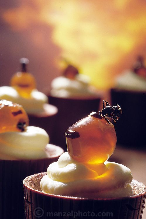 """Vic Cherikoff's """"Honey Ant Dreaming"""" made from frozen replete honey ants (Melophorus bagoti), placed on cream filled chocolate cups, Sydney, Australia. (Man Eating Bugs page 11. See Man Eating Bugs page 28)."""