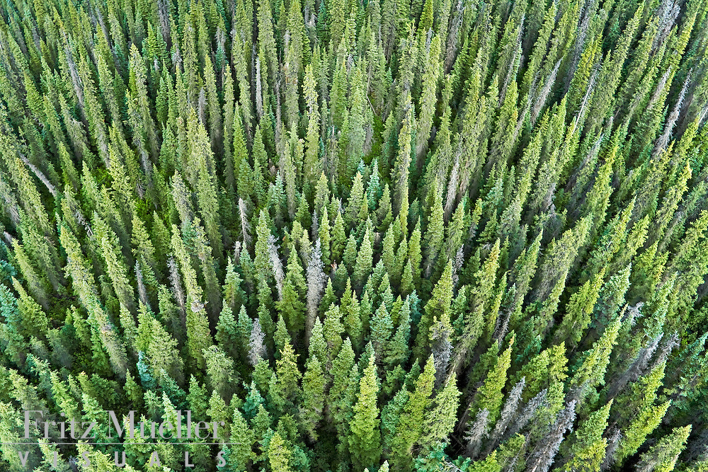 Aerial view of the boreal forest