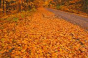 Country road in autumn color<br />Rutherglen<br />Ontario<br />Canada