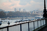Seagulls standing in line on a handrail by the river.