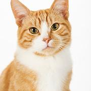 20131011 Chris Cats