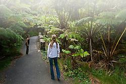 Woman visitors exploring tropical rainforest of Hapu`u Pulu or Fern Tree, Cibotium glaucum, and `Ohi`a Lehuna, Metrosideros polymorpha, Hawaii Volcanoes National Park, Kilauea, Big Island, Hawaii