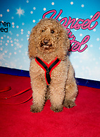 Waffle The Wonder Dog at the CBeebies Christmas Show Hansel and Gretel, Cineworld Leicester Square, London. 24.11.19