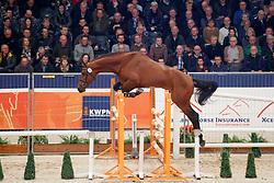 072, Klasse W<br /> KWPN Stallionshow - 's Hertogenbosch 2018<br /> © Hippo Foto - Dirk Caremans<br /> 01/02/2018