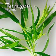 Tarragon Pictures | Tarragon Food Photos Images & Fotos