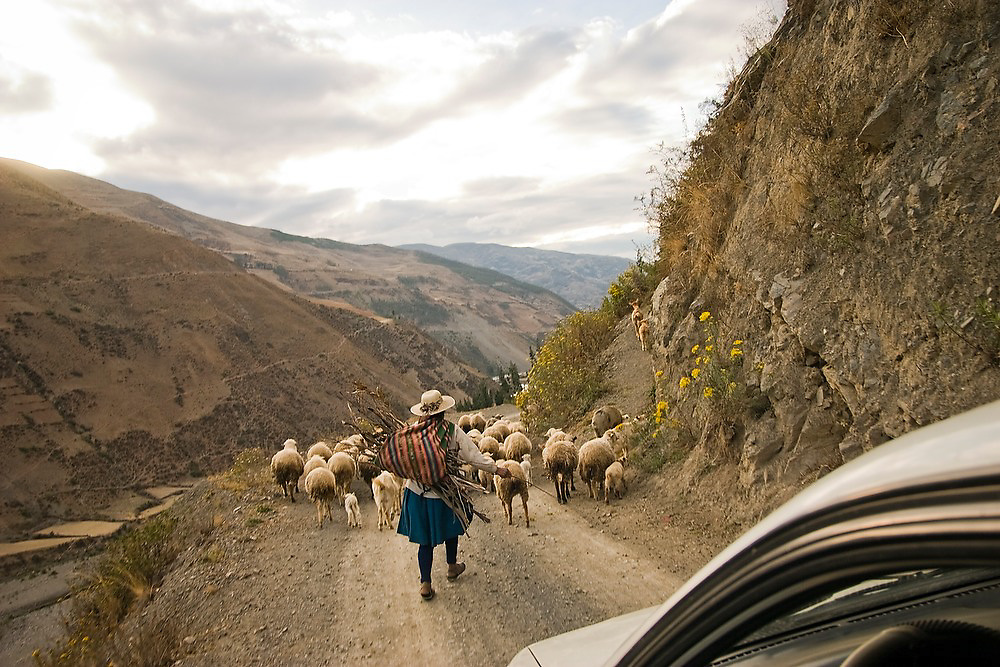 A car drives behind a shepherd woman and her herd of sheep and goats on a dirt road in the Cordillera de Paucartambo, Andes Mountains, Peru.