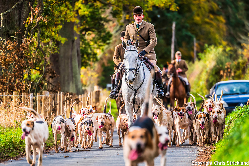 Ancrum, Jedburgh, Scottish Borders, UK. 24th October 2018.The Duke of Buccleuch foxhounds flush foxes from cover to guns near Ancrum village on a dry morning in the Borders.