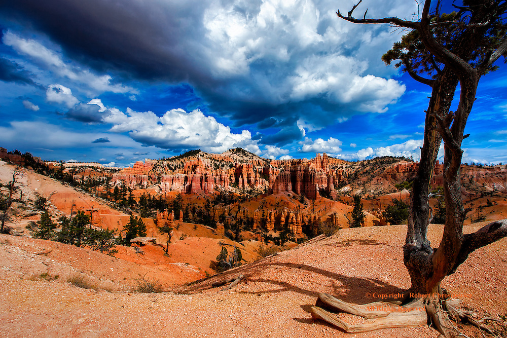 Storms of Time: Storm clouds gather over this ancient arid landscape filled with aged evergreen trees, barren hilltops and mountains, Fairyland trail, Bryce National Park, Utah USA.
