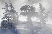 Trees in fog on the Wabigoon River <br /> Vermillion Bay<br /> Ontario<br /> Canada
