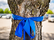 """06 MAY 2020 - DES MOINES, IOWA: Blue ribbons honoring nurses around a tree at Unity Point Health Iowa Methodist Medical Center in Des Moines. Des Moines first responders, the Iowa State Patrol, and utility companies made an """"Appreciation Loop"""" around the hospital on National Nurses' Day to thank nurses and other care givers at the hospital for the care they are providing during the COVID-19 (Coronavirus/SARS-CoV-2) pandemic. Iowa reported 10,404 confirmed cases of COVID-19 statewide Wednesday, about 2,500 cases in the Des Moines metropolitan area. Acting against the advice of many medical professionals, the Governor of Iowa has started reopening businesses in the state. Businesses in the Des Moines area, and other communities with a high number of cases are not allowed to reopen.       PHOTO BY JACK KURTZ"""